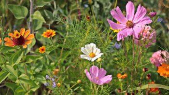 Permalink auf:Wildblumen statt Pflastersteine